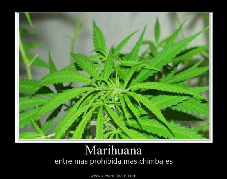 Descargar Imagenes De Marihuana Con Frases Auto Design Tech