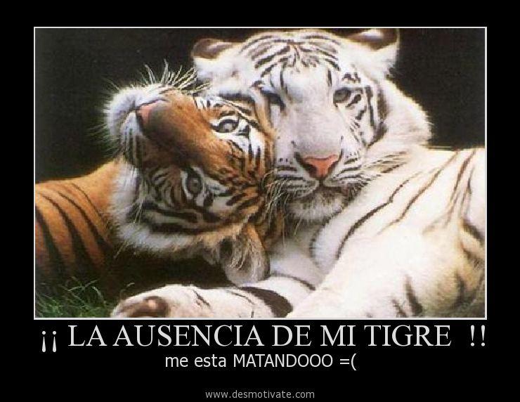 Imagen De Tigres Con Frases Imagui